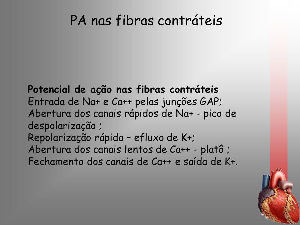 PA nas fibras contráteis Potencial de ação nas fibras contráteis Entrada de Na+ e Ca++ pelas junções GAP; Abertura dos canais rápidos de Na+ - pico de
