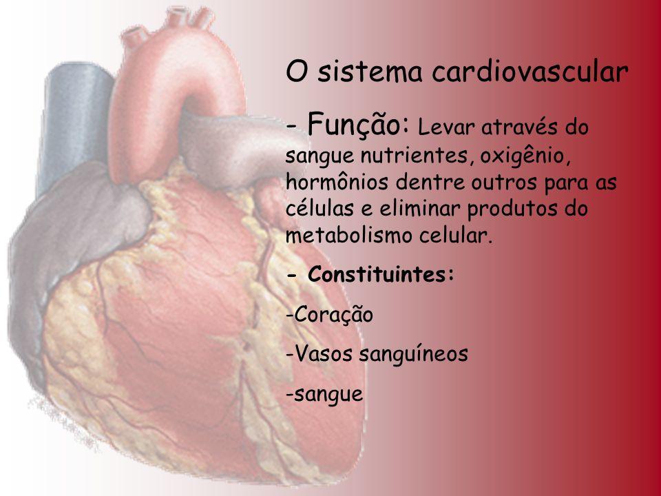 O sistema cardiovascular - Função: Levar através do sangue nutrientes, oxigênio, hormônios dentre outros para as células e eliminar produtos do metabo