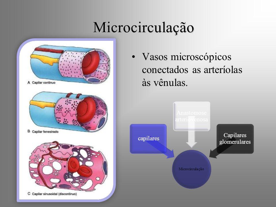 Microcirculação Vasos microscópicos conectados as arteríolas às vênulas. Microcirculação capilares Anastomose arteriovenosa Capilares glomerulares