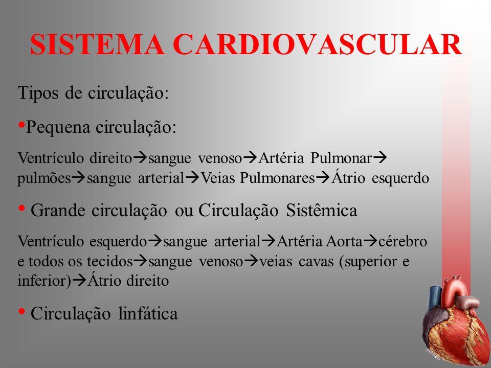 SISTEMA CARDIOVASCULAR Tipos de circulação: Pequena circulação: Ventrículo direito sangue venoso Artéria Pulmonar pulmões sangue arterial Veias Pulmon