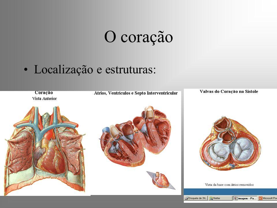O coração Localização e estruturas: