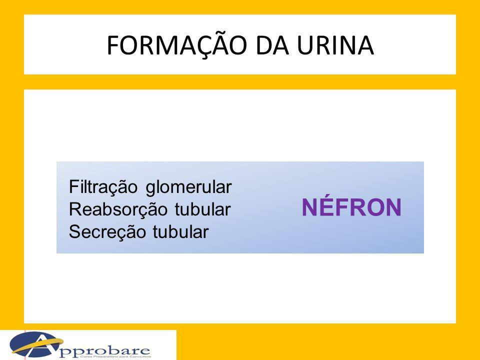 FORMAÇÃO DA URINA NÉFRON Filtração glomerular Reabsorção tubular Secreção tubular