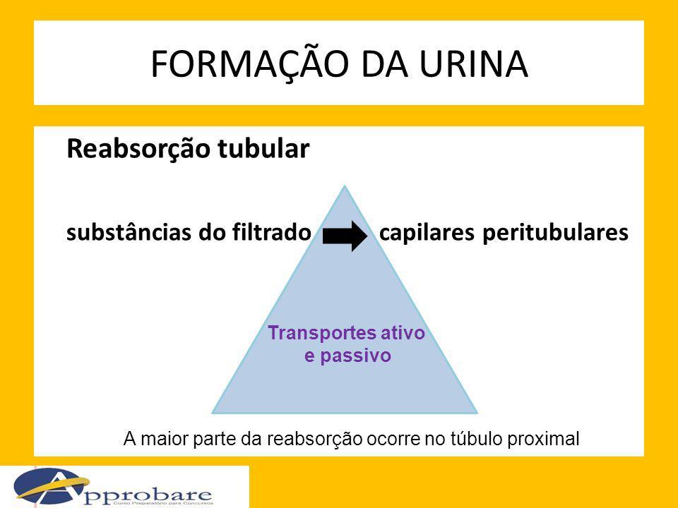 FORMAÇÃO DA URINA Reabsorção tubular substâncias do filtrado capilares peritubulares Transportes ativo e passivo A maior parte da reabsorção ocorre no