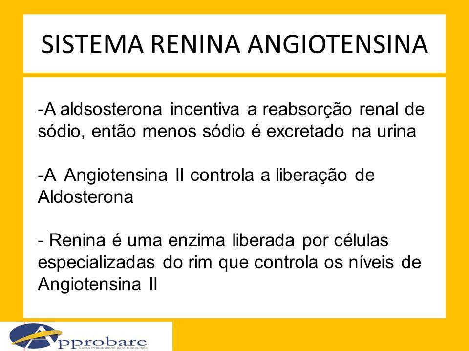 SISTEMA RENINA ANGIOTENSINA -A aldsosterona incentiva a reabsorção renal de sódio, então menos sódio é excretado na urina -A Angiotensina II controla