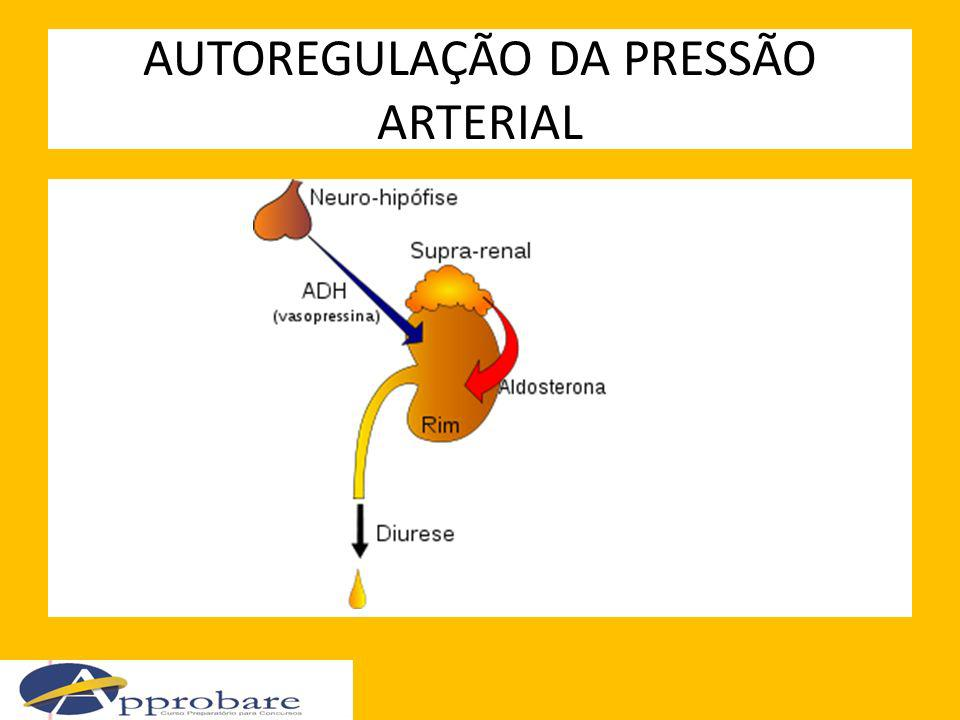 AUTOREGULAÇÃO DA PRESSÃO ARTERIAL