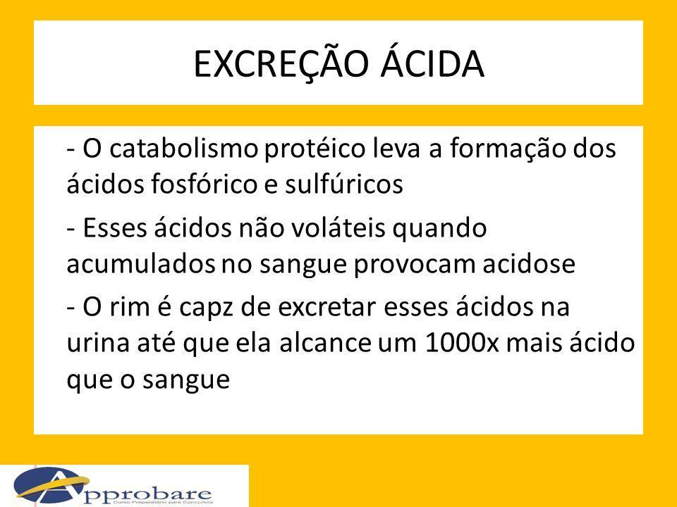 EXCREÇÃO ÁCIDA - O catabolismo protéico leva a formação dos ácidos fosfórico e sulfúricos - Esses ácidos não voláteis quando acumulados no sangue prov