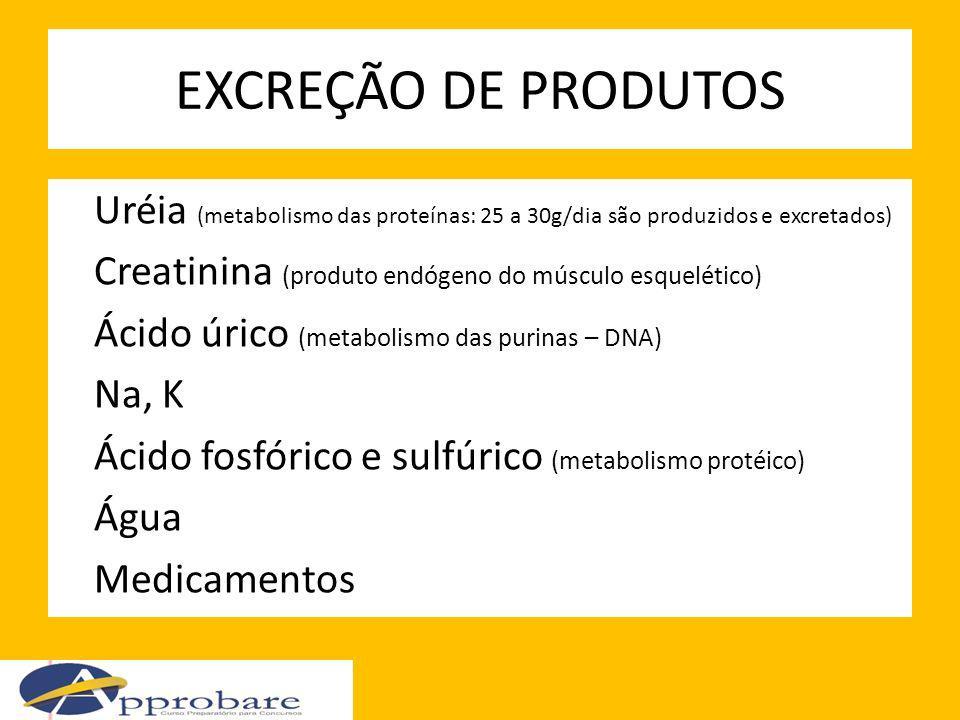 EXCREÇÃO DE PRODUTOS Uréia (metabolismo das proteínas: 25 a 30g/dia são produzidos e excretados) Creatinina (produto endógeno do músculo esquelético)