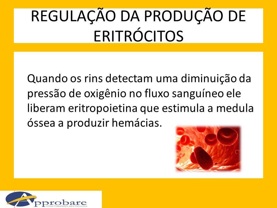 REGULAÇÃO DA PRODUÇÃO DE ERITRÓCITOS Quando os rins detectam uma diminuição da pressão de oxigênio no fluxo sanguíneo ele liberam eritropoietina que e