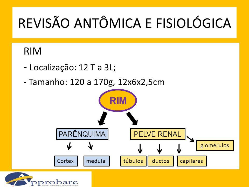 RIM - Localização: 12 T a 3L; - Tamanho: 120 a 170g, 12x6x2,5cm REVISÃO ANTÔMICA E FISIOLÓGICA PARÊNQUIMAPELVE RENAL Cortexmedula glomérulos túbulosdu