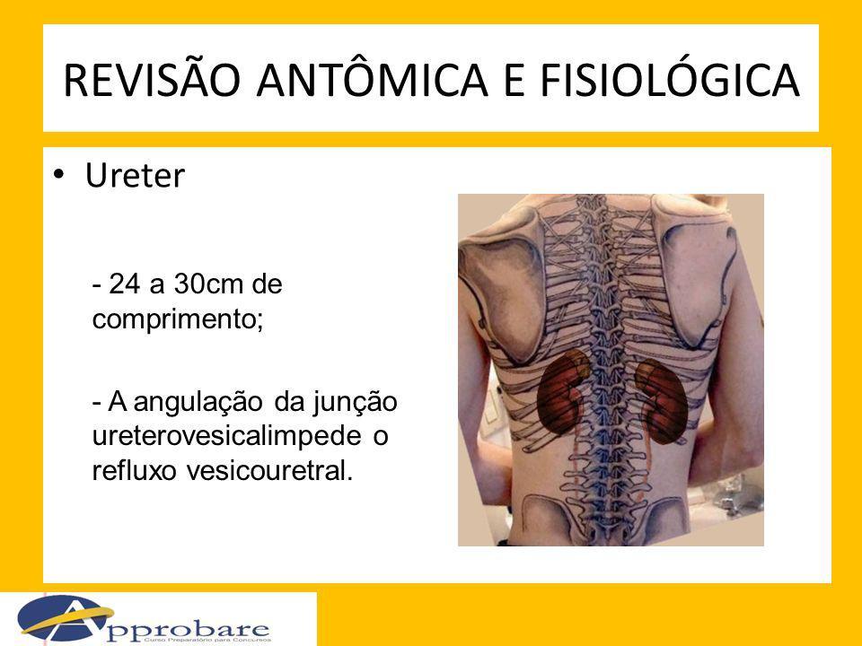 Ureter REVISÃO ANTÔMICA E FISIOLÓGICA - 24 a 30cm de comprimento; - A angulação da junção ureterovesicalimpede o refluxo vesicouretral.