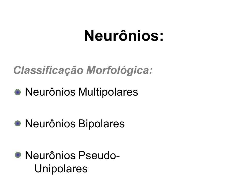 Neurônios Multipolares Neurônios Bipolares Neurônios Pseudo- Unipolares Neurônios: Classificação Morfológica: