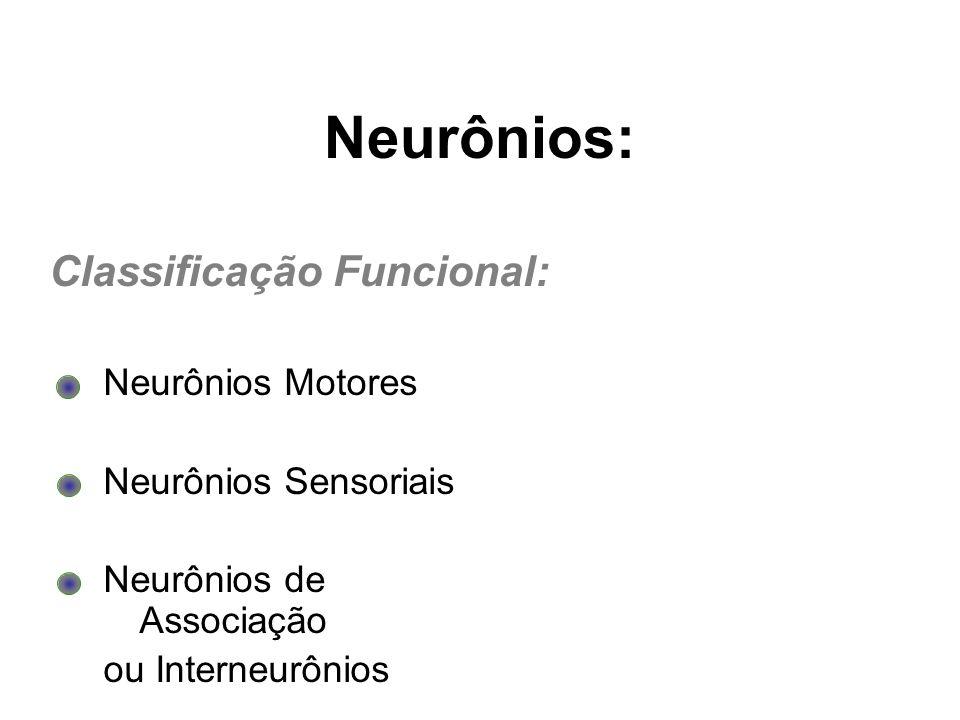 Neurônios Motores Neurônios Sensoriais Neurônios de Associação ou Interneurônios Neurônios: Classificação Funcional: