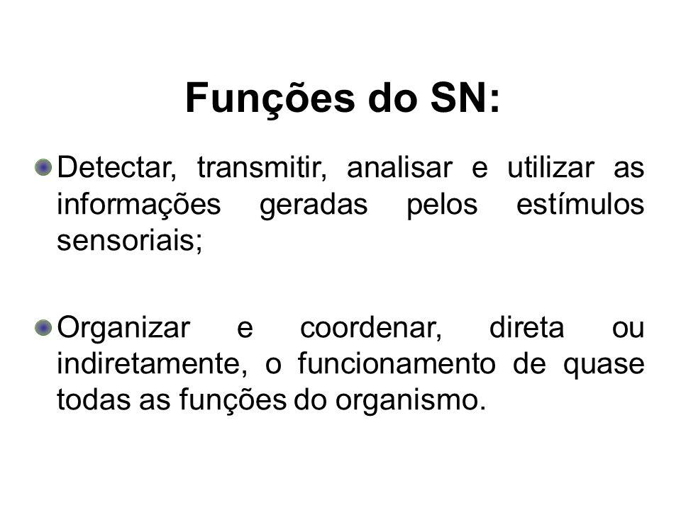 Funções do SN: Detectar, transmitir, analisar e utilizar as informações geradas pelos estímulos sensoriais; Organizar e coordenar, direta ou indiretam