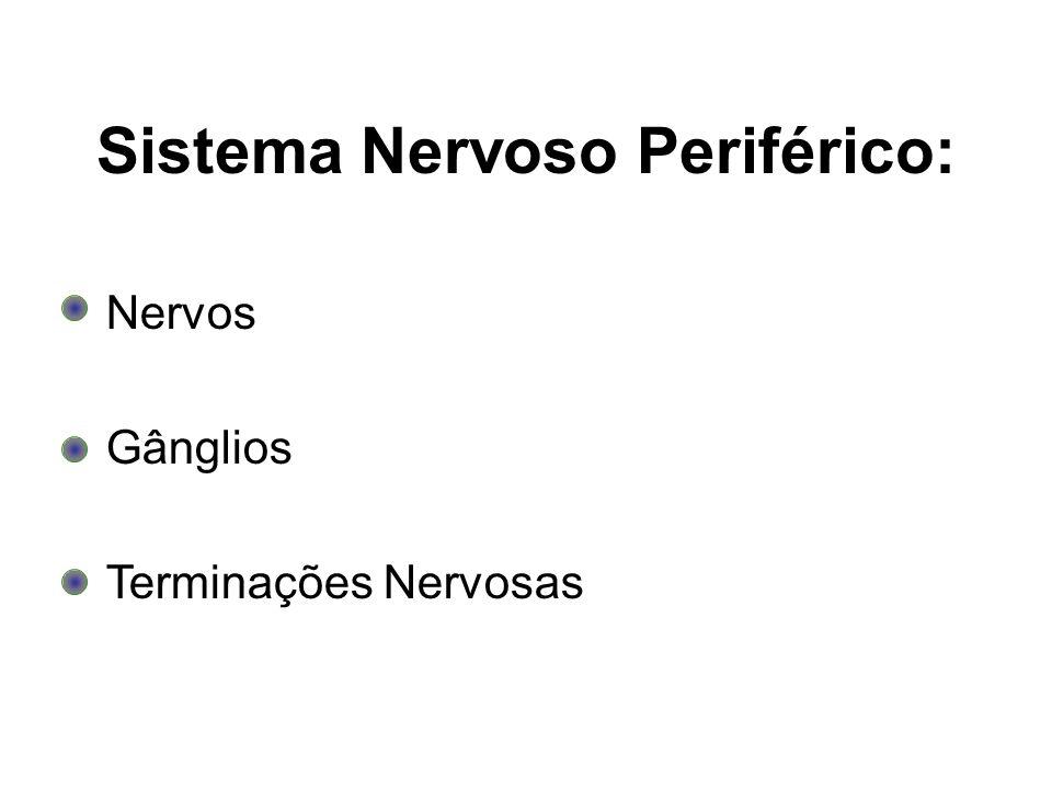 Sistema Nervoso Periférico: Nervos Gânglios Terminações Nervosas