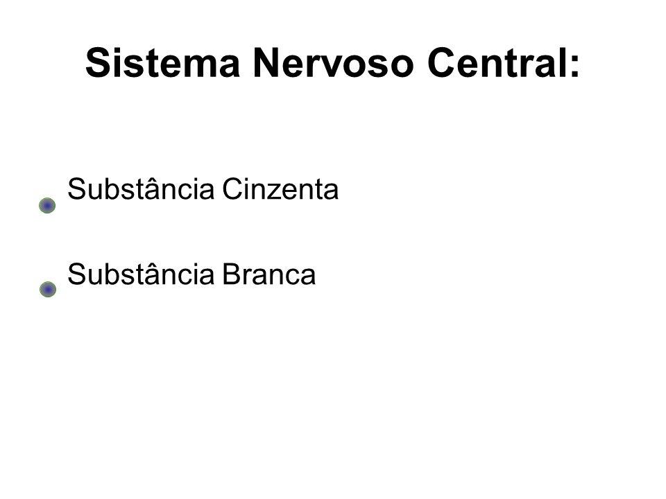 Sistema Nervoso Central: Substância Cinzenta Substância Branca