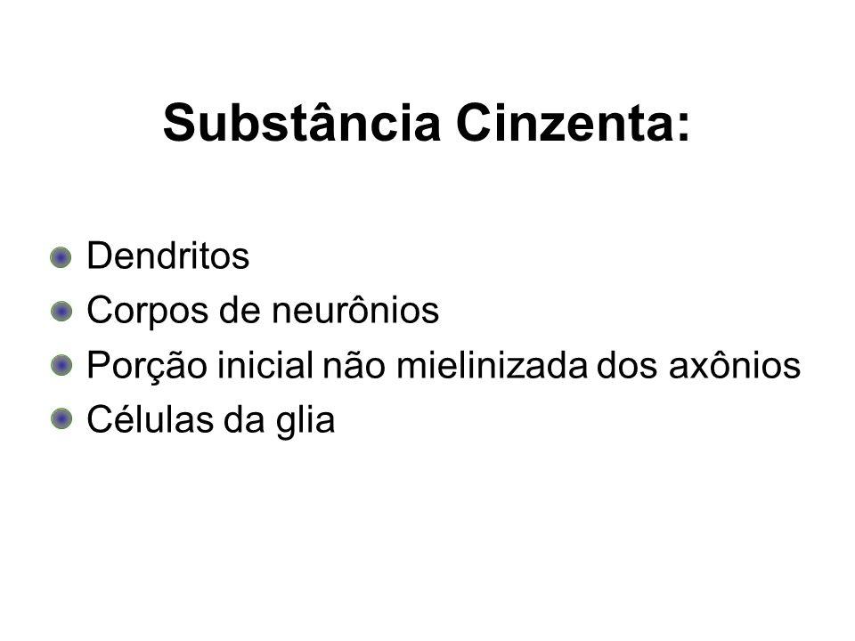 Substância Cinzenta: Dendritos Corpos de neurônios Porção inicial não mielinizada dos axônios Células da glia