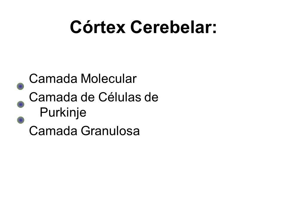 Córtex Cerebelar: Camada Molecular Camada de Células de Purkinje Camada Granulosa