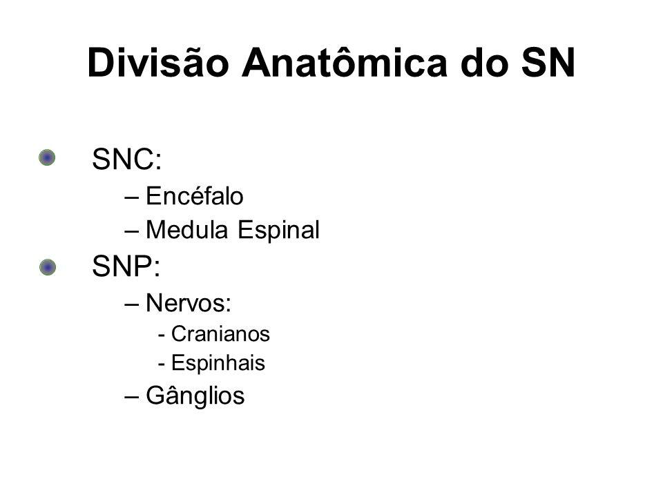 Divisão Anatômica do SN SNC: –Encéfalo –Medula Espinal SNP: –Nervos: - Cranianos - Espinhais –Gânglios