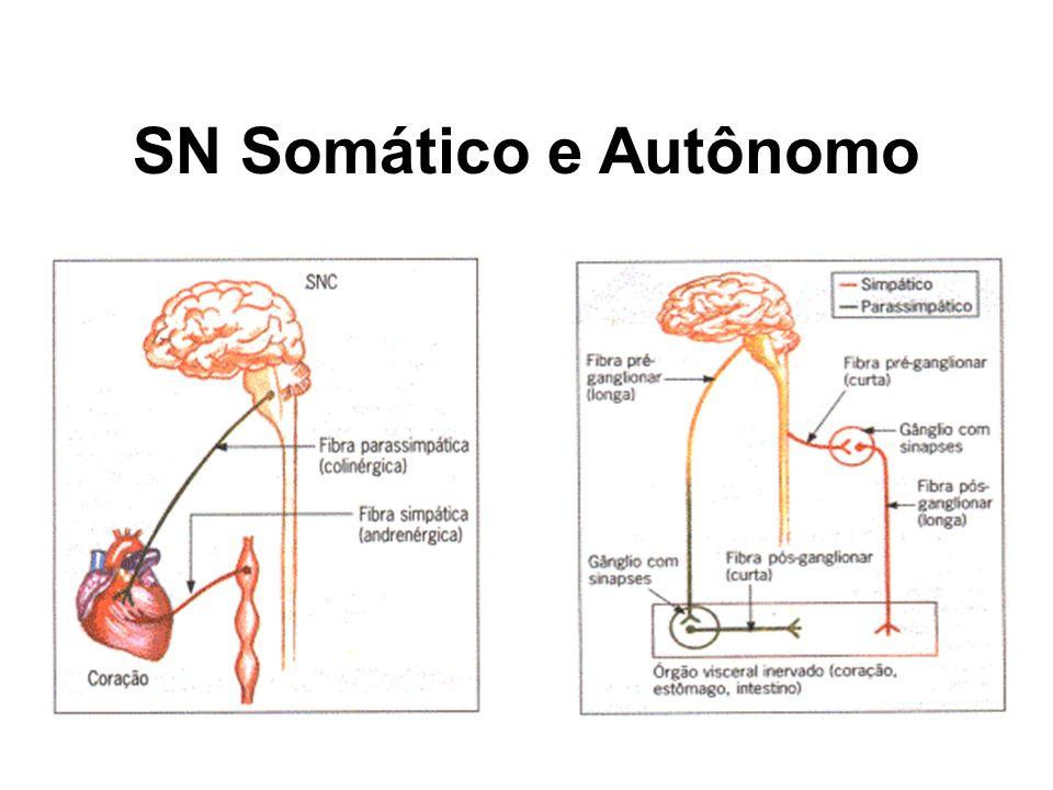 SN Somático e Autônomo