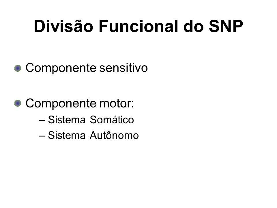 Divisão Funcional do SNP Componente sensitivo Componente motor: –Sistema Somático –Sistema Autônomo