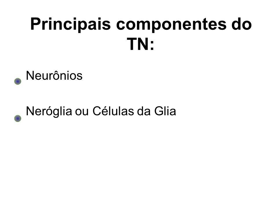 Principais componentes do TN: Neurônios Neróglia ou Células da Glia