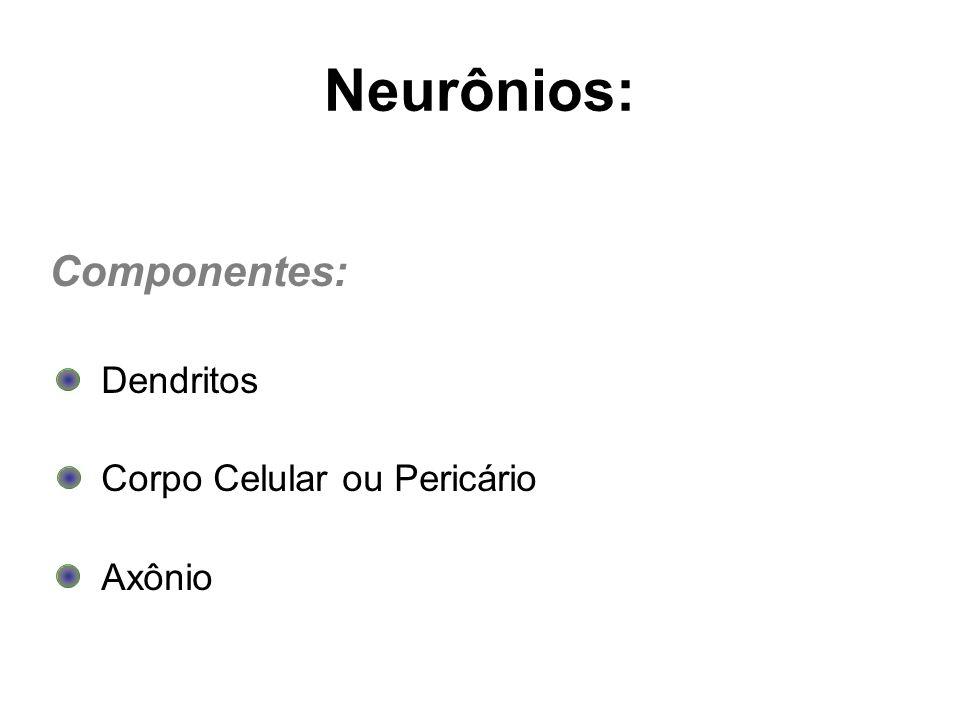 Neurônios: Componentes: Dendritos Corpo Celular ou Pericário Axônio