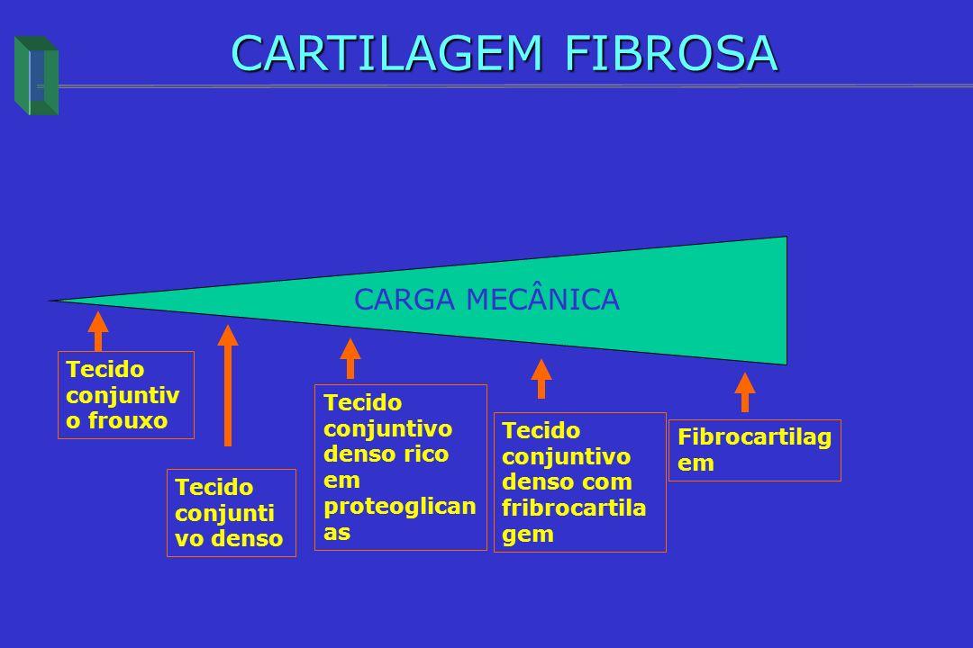 Tecido conjuntiv o frouxo Tecido conjunti vo denso Tecido conjuntivo denso rico em proteoglican as Tecido conjuntivo denso com fribrocartila gem Fibro
