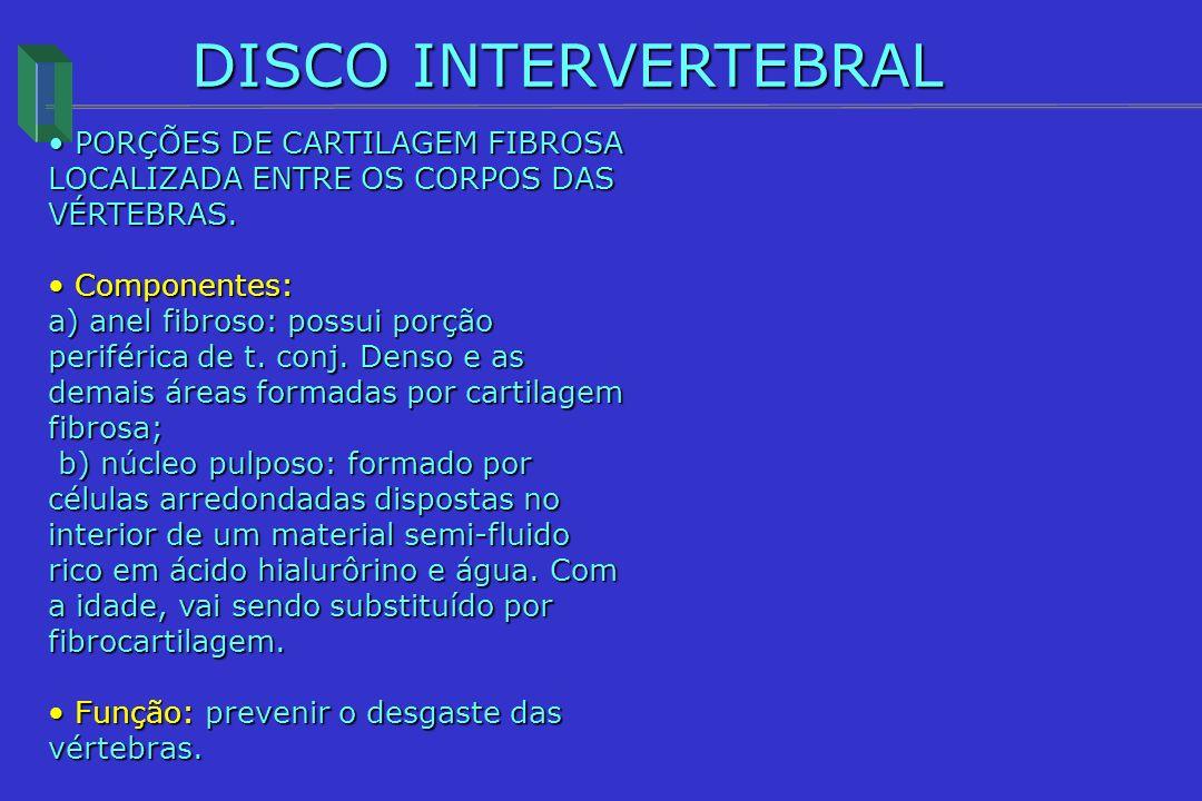 DISCO INTERVERTEBRAL PORÇÕES DE CARTILAGEM FIBROSA LOCALIZADA ENTRE OS CORPOS DAS VÉRTEBRAS. PORÇÕES DE CARTILAGEM FIBROSA LOCALIZADA ENTRE OS CORPOS