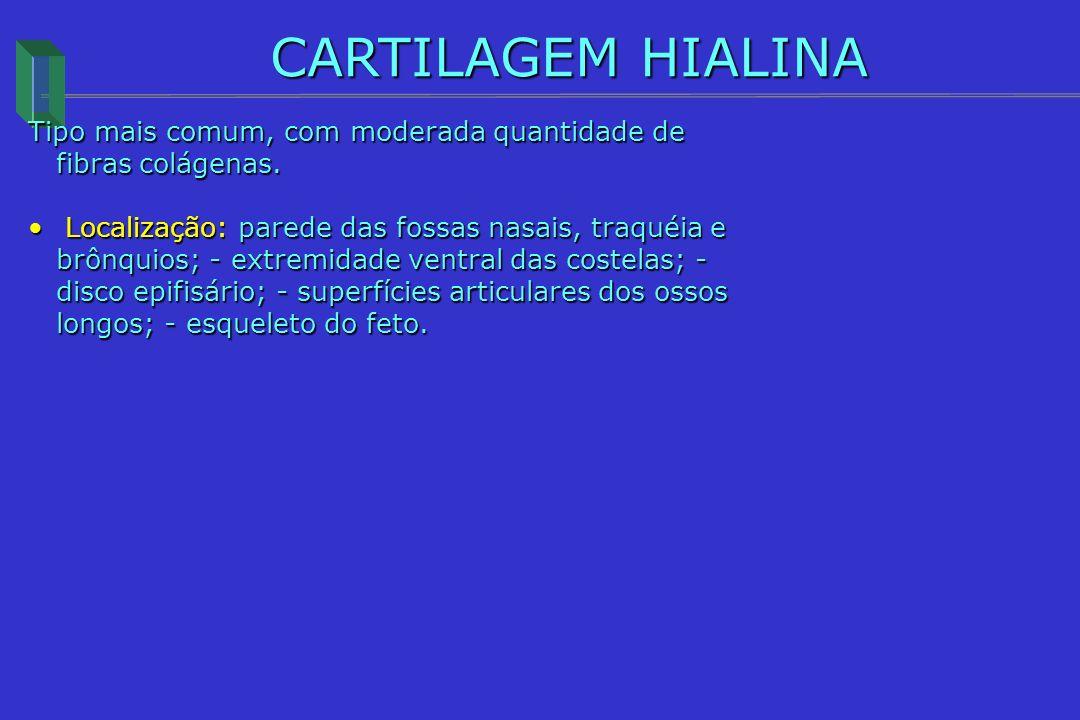 CARTILAGEM HIALINA Tipo mais comum, com moderada quantidade de fibras colágenas. Localização: parede das fossas nasais, traquéia e brônquios; - extrem