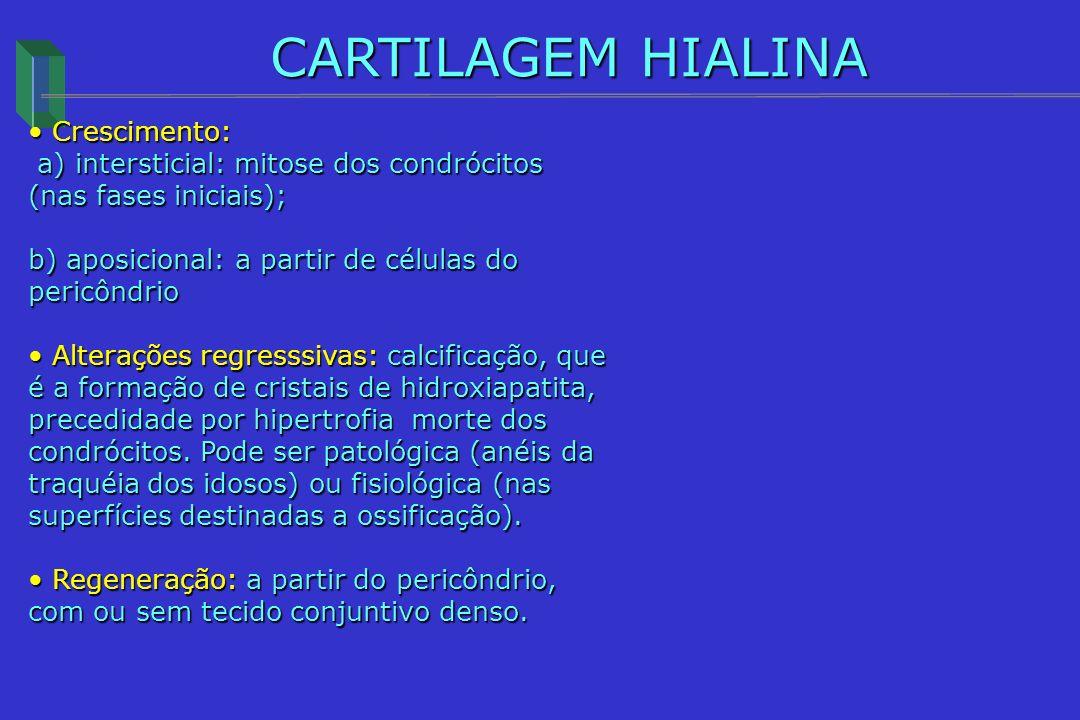 CARTILAGEM HIALINA Crescimento: Crescimento: a) intersticial: mitose dos condrócitos (nas fases iniciais); a) intersticial: mitose dos condrócitos (na