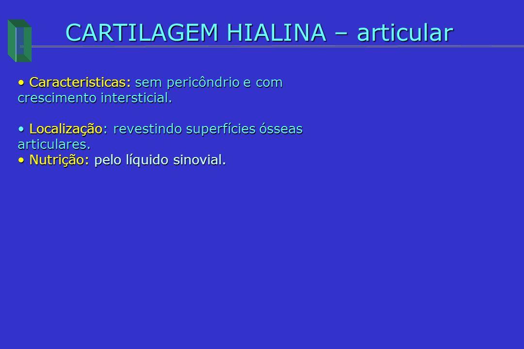 CARTILAGEM HIALINA – articular Caracteristicas: sem pericôndrio e com crescimento intersticial. Caracteristicas: sem pericôndrio e com crescimento int