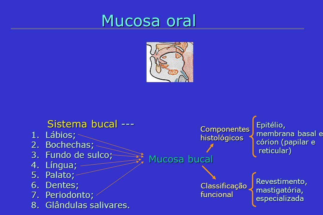 Mucosa oral Sistema bucal --- Sistema bucal --- 1.Lábios; 2.Bochechas; 3.Fundo de sulco; 4.Língua; 5.Palato; 6.Dentes; 7.Periodonto; 8.Glândulas saliv