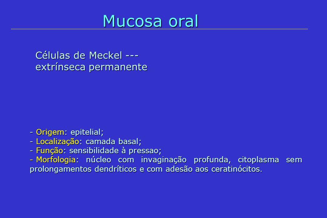Mucosa oral - Origem: epitelial; - Localização: camada basal; - Função: sensibilidade à pressao; - Morfologia: núcleo com invaginação profunda, citopl