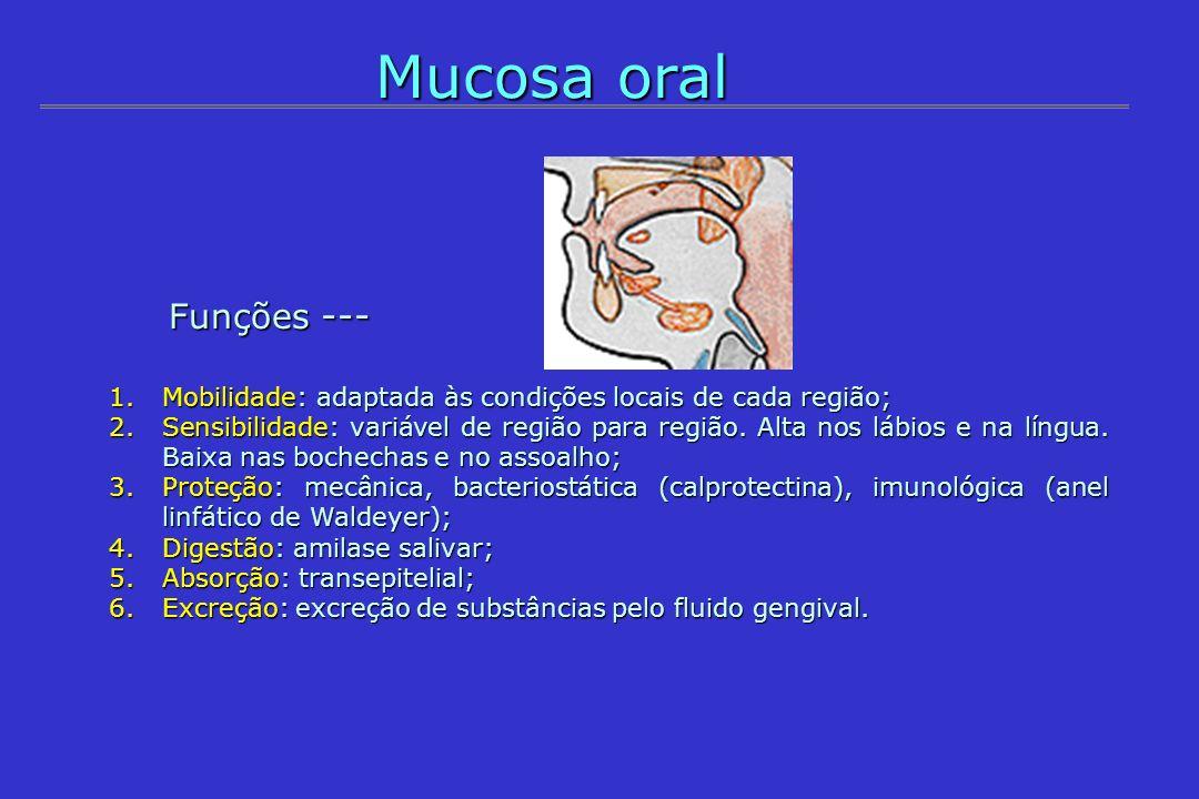 Mucosa oral Funções --- Funções --- 1.Mobilidade: adaptada às condições locais de cada região; 2.Sensibilidade: variável de região para região. Alta n