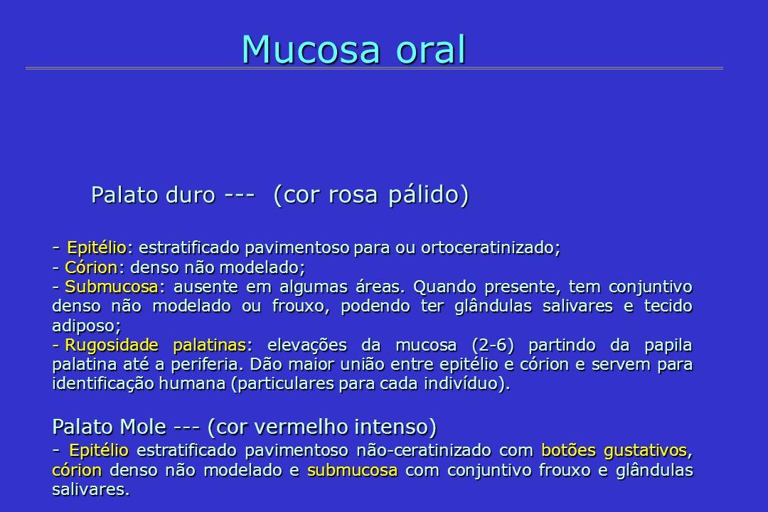 Mucosa oral Palato duro --- (cor rosa pálido) Palato duro --- (cor rosa pálido) - Epitélio: estratificado pavimentoso para ou ortoceratinizado; - Córi