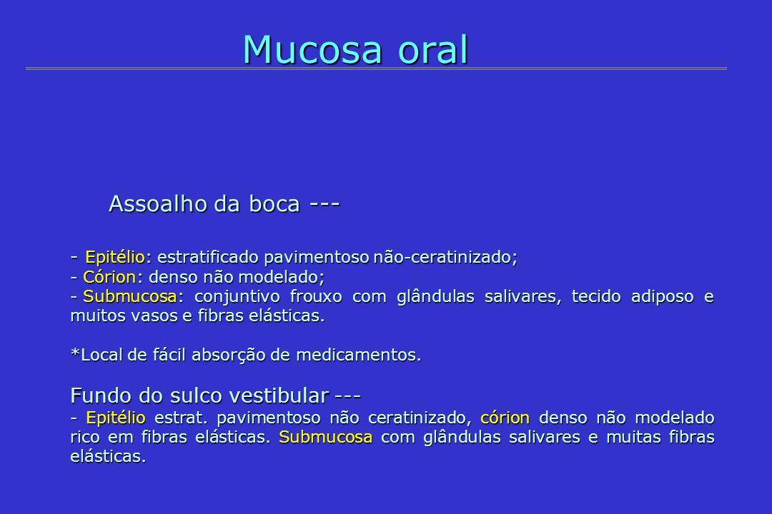 Mucosa oral Assoalho da boca --- Assoalho da boca --- - Epitélio: estratificado pavimentoso não-ceratinizado; - Córion: denso não modelado; - Submucos