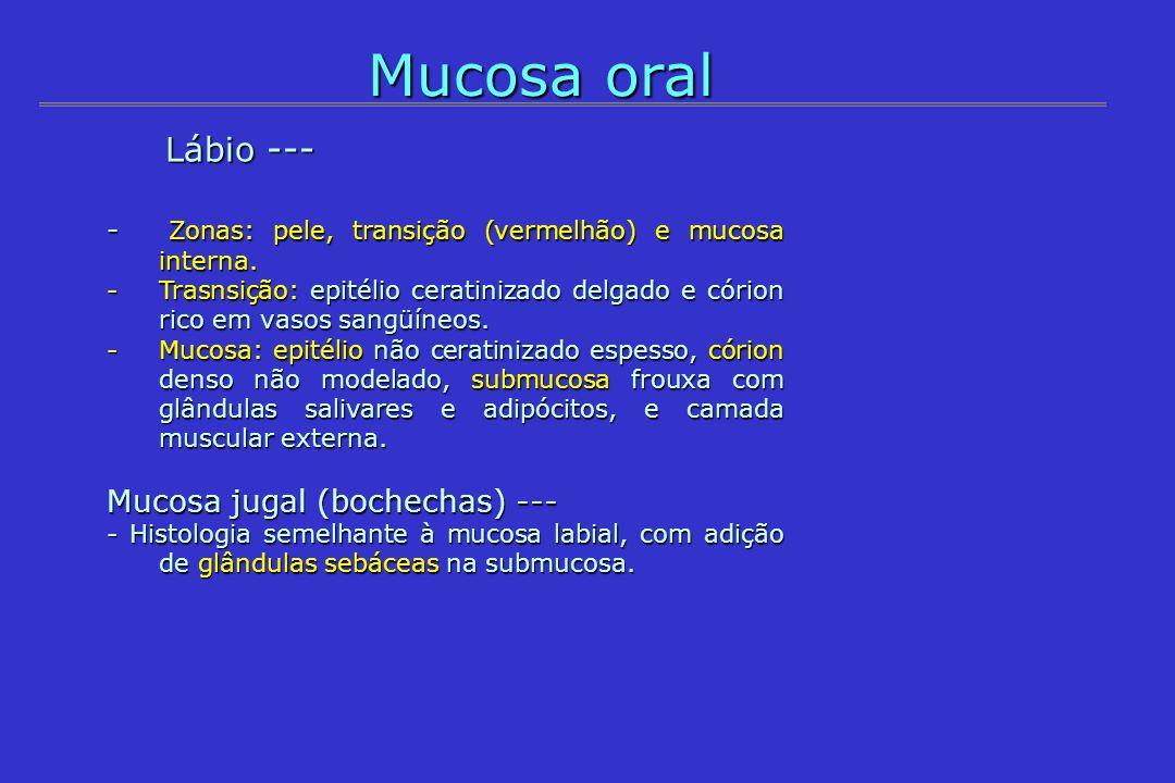 Mucosa oral Lábio --- Lábio --- - Zonas: pele, transição (vermelhão) e mucosa interna. -Trasnsição: epitélio ceratinizado delgado e córion rico em vas