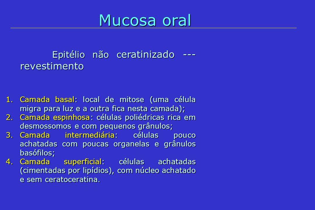 Mucosa oral Epitélio não c eratinizado --- revestimento Epitélio não c eratinizado --- revestimento 1.Camada basal: local de mitose (uma célula migra