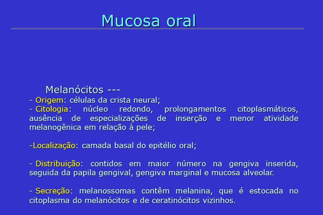 Mucosa oral Melanócitos --- Melanócitos --- - Origem: células da crista neural; - Citologia: núcleo redondo, prolongamentos citoplasmáticos, ausência