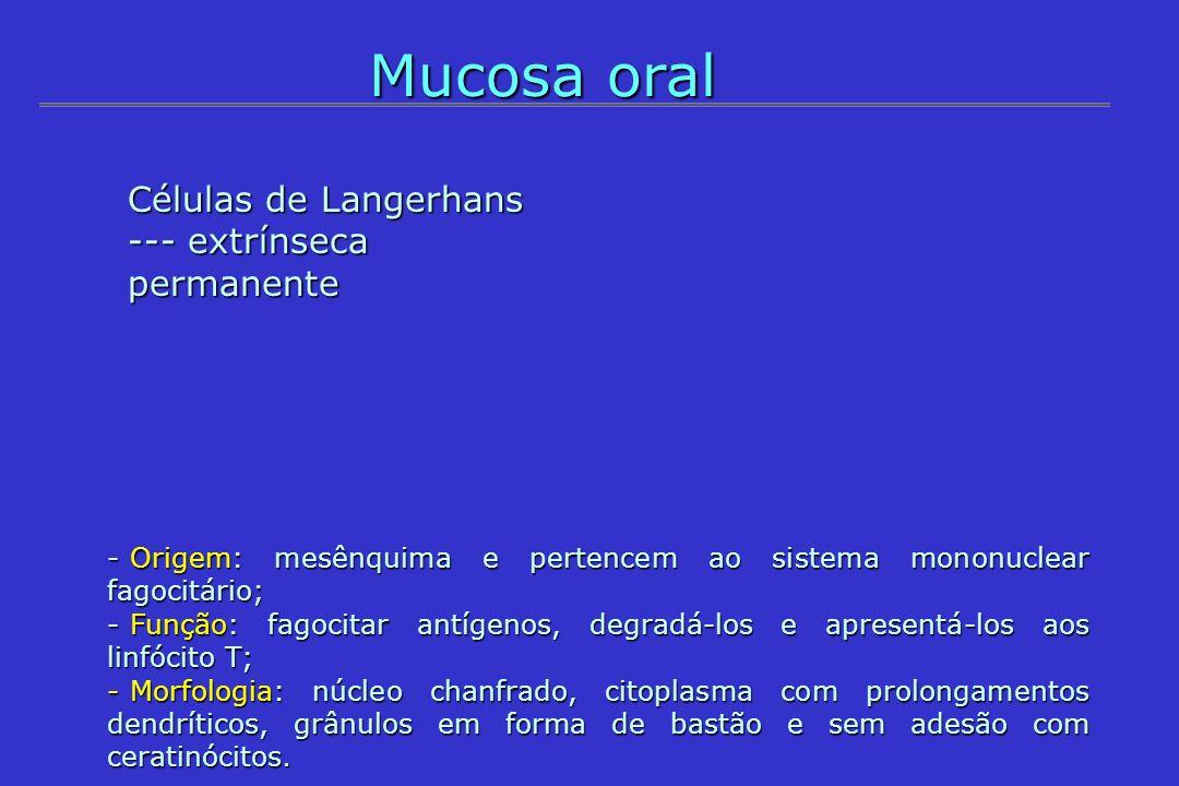 Mucosa oral - Origem: mesênquima e pertencem ao sistema mononuclear fagocitário; - Função: fagocitar antígenos, degradá-los e apresentá-los aos linfóc