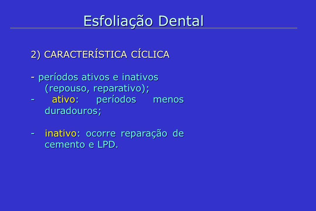 Esfoliação Dental 2) CARACTERÍSTICA CÍCLICA - períodos ativos e inativos (repouso, reparativo); - ativo: períodos menos duradouros; - inativo: ocorre