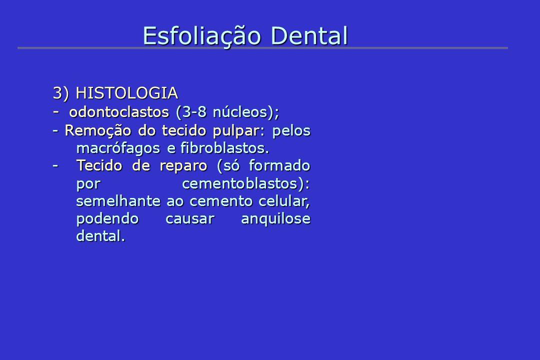 Esfoliação Dental 3) HISTOLOGIA - odontoclastos (3-8 núcleos); - Remoção do tecido pulpar: pelos macrófagos e fibroblastos. - Tecido de reparo (só for