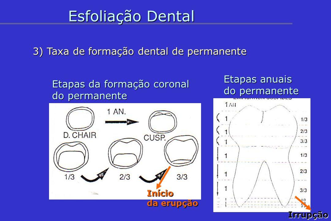 Esfoliação Dental 3) Taxa de formação dental de permanente Etapas anuais do permanente Etapas da formação coronal do permanente Início da erupção Irru