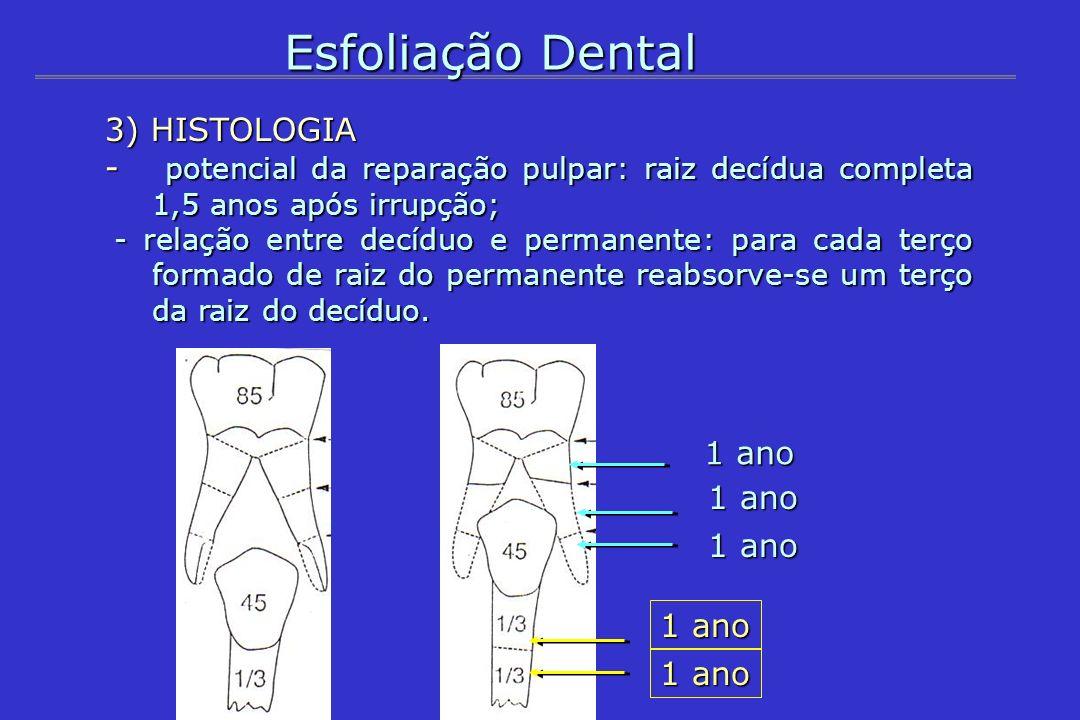 Esfoliação Dental 3) HISTOLOGIA - potencial da reparação pulpar: raiz decídua completa 1,5 anos após irrupção; - relação entre decíduo e permanente: p