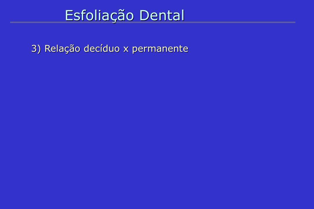 Esfoliação Dental 3) Relação decíduo x permanente