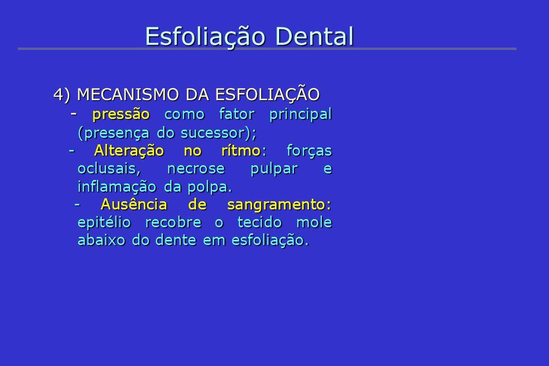 Esfoliação Dental 4) MECANISMO DA ESFOLIAÇÃO - pressão como fator principal (presença do sucessor); - pressão como fator principal (presença do sucess