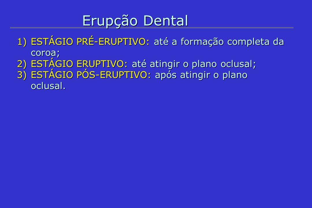 Erupção Dental 1) MOVIMENTO PRÉ-ERUPTIVO (até a formação completa da coroa) - Deslocamento dos dentes decíduos: anteriores para mesial oclusal posteriores para distal posteriores para distal - Dentes sucessores Anteriores apical e lingual Posteriores apical e oclusal