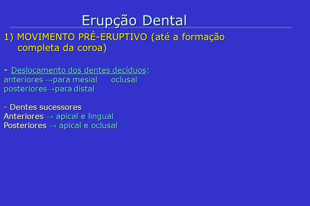 Erupção Dental 1) MOVIMENTO PRÉ-ERUPTIVO (até a formação completa da coroa) Histologia (ao redor do dente) 1.Folículo dental; 2.Tecido conjuntivo frouxo; 3.Osso (exceto oclusal nos decíduos); 4.