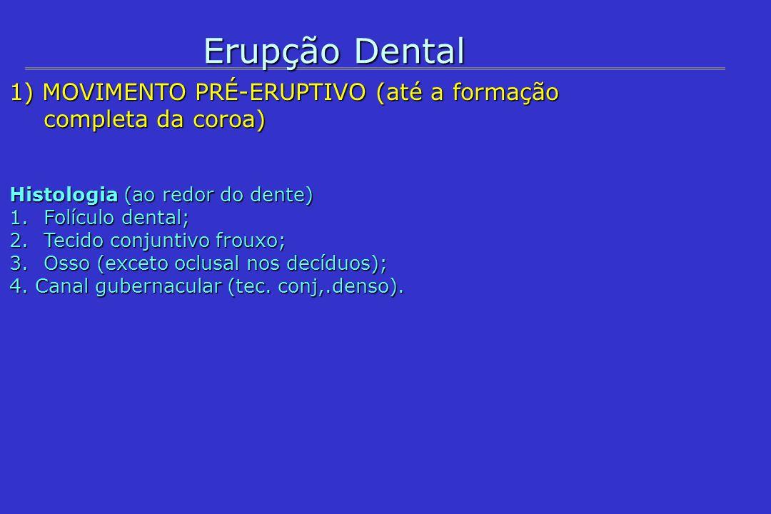 Erupção Dental Movimento eruptivo ---- Movimento eruptivo ---- Movimentos: oclusal; rotação (II); mesialização (PMI); inclinação (CS e 3 MI) Eventos: 1) Início da erupção: coroa completa/ início da formação radicular; 1) Início da erupção: coroa completa/ início da formação radicular; 2) Reações ósseas: reabsorção na oclusal e neoformação no ápice; 3) Reabsorção do tecido conjuntivo denso da gengiva; 4) Estabelecimento do caminho através do epitélio; 5) Reabsorção das raízes dos dentes decíduos e esfoliação das coroas.