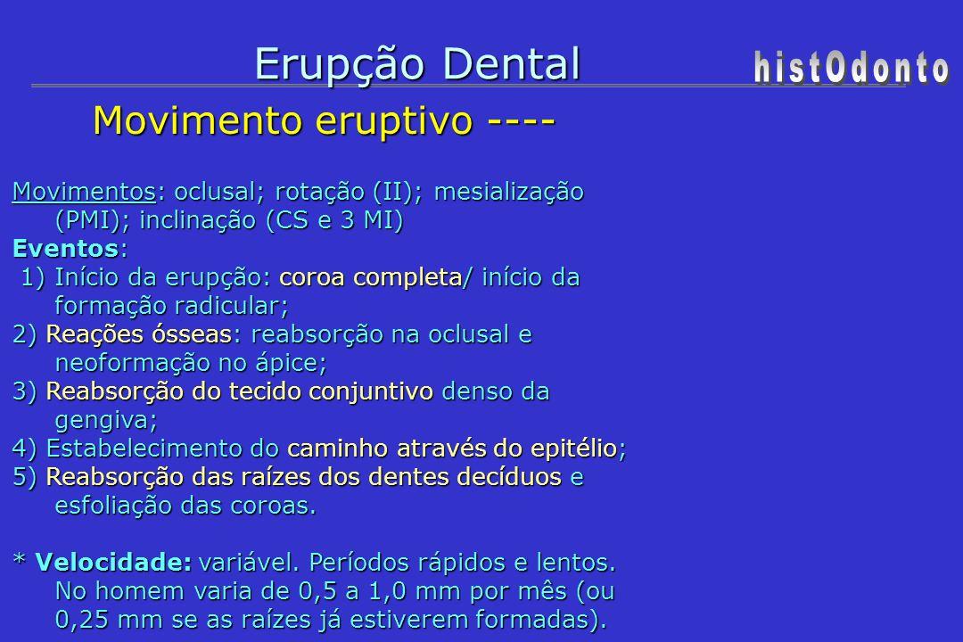 Erupção Dental Movimento eruptivo --- Movimento eruptivo --- - Estágio irruptivo da dentição decídua: do 6° ao 30° mês.